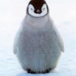 A fluffy penguin