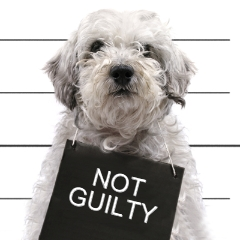 Dog with Not Guilty sign | GDPR - your Website and Marketing Checklist